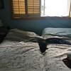 Cat-a-bed