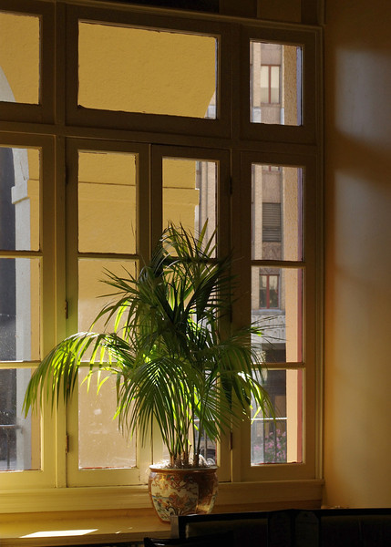 Potted palm in window, The Arlington Hotel, Hot Springs, Arkansas.