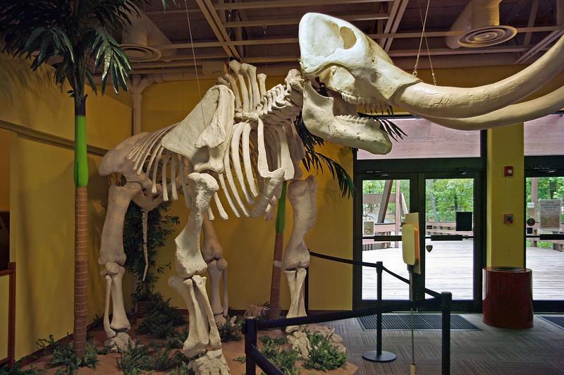 Mastodon skeleton, Mid-America Science Museum, Hot Springs, Arkansas.