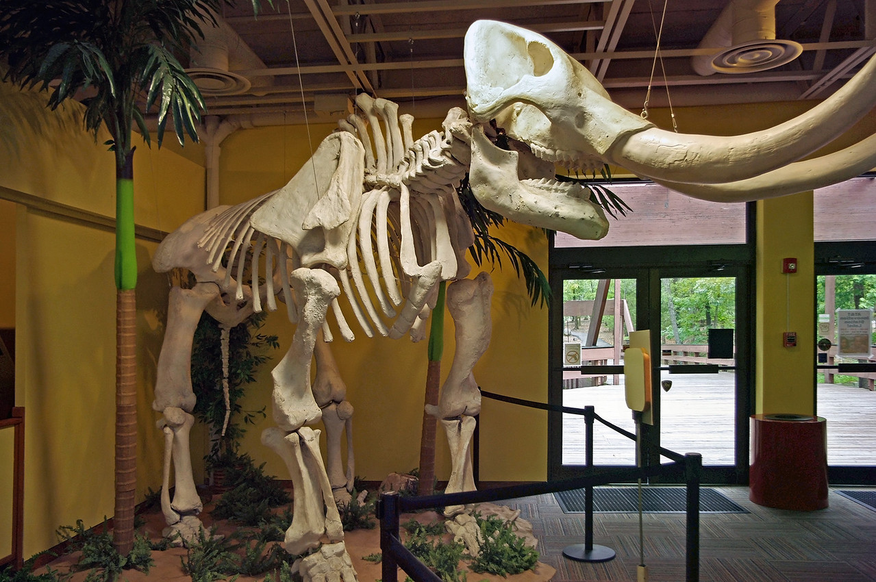 Mastodon skeleton, Mid-America Science Museum, Hot Springs, Arkansas.