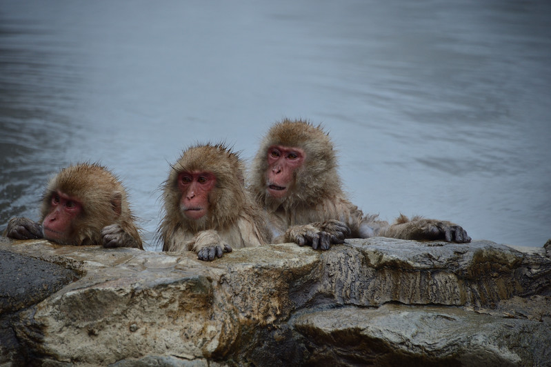 3 monkeys in a bath