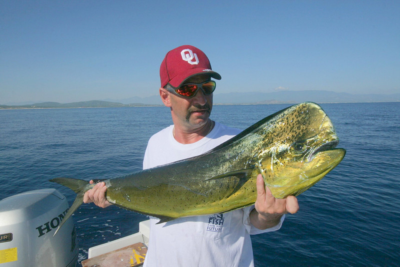 This nice Dorado was caught within a few miles of shore when it ate a live bait right next to the boat.