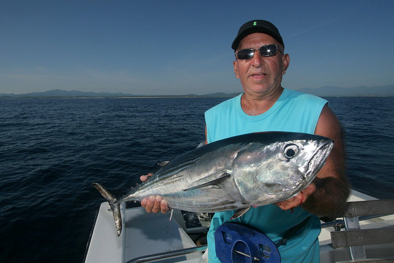 Big skipjack Tuna are common all through out the Sea of Cortez.