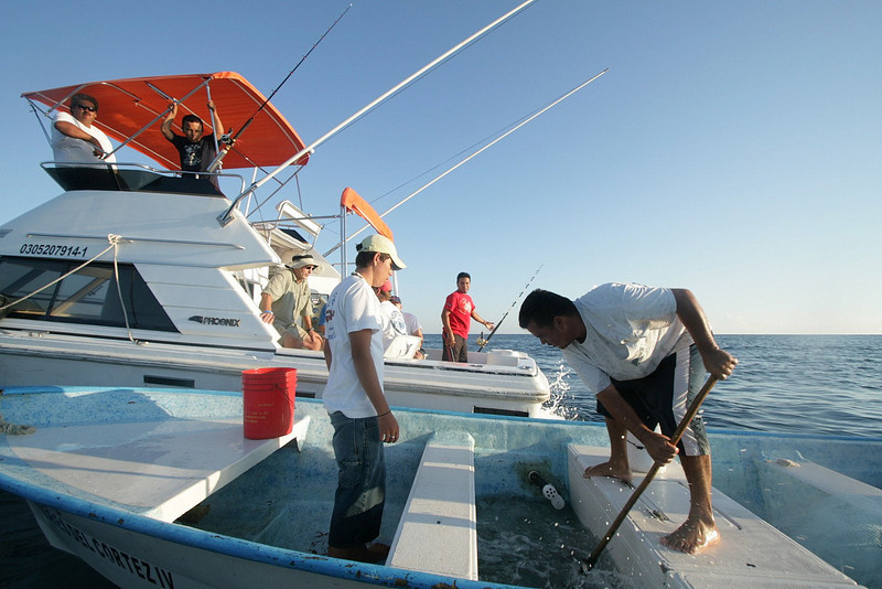 Many local fisherman make their living catching live bait for sport fisherman. For $10, you can fill your live well up with live bait.
