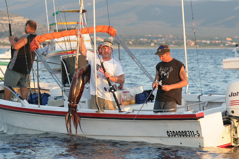 Humboldt Squid are great eating and also a great bait.