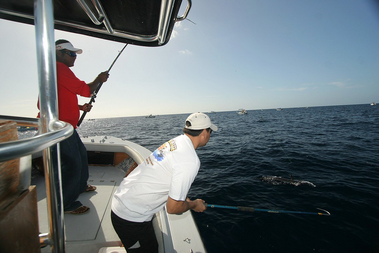 Our targeted Wahoo is being gingerly brought to the boat by our captain with no wire leader. Axel just set the gaff when the Wahoo bit through the mono.