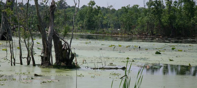 Alligator territory.