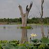 Elm Lake.