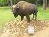 Rambo the Buffalo