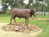 Tiny the Bull