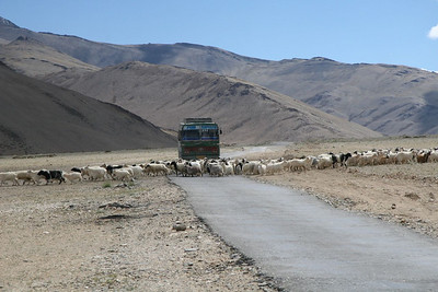 100km from the nearest town, WIDE open country in ALL directions, and there's a traffic jam. of sorts.  (Ladakh area, India)