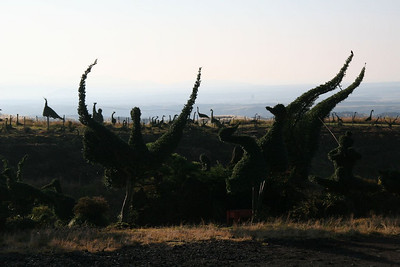 Bansai trees gone bad