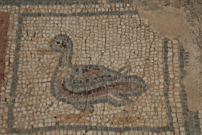 Even in Roman times, they had their duck motif in the tiled mosaic bathroom (Ephesus, Turkey)