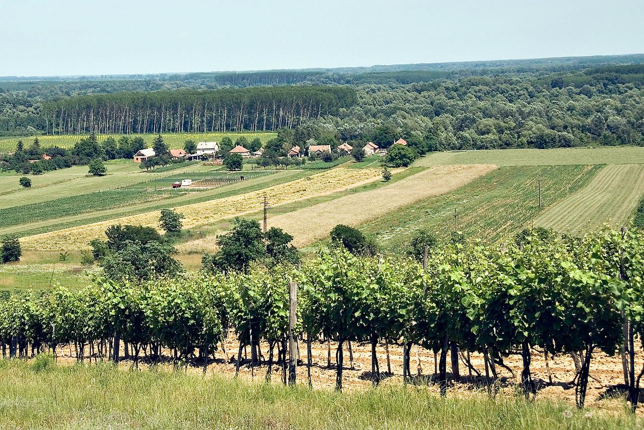 Hungary's Tokaj region