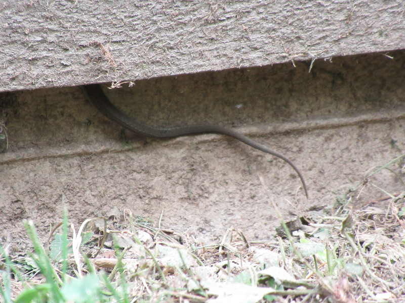 There's a snake in the shed.