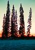 Sunset, our front yard, Badger Rd, North Pole, Alaska, oct 1970