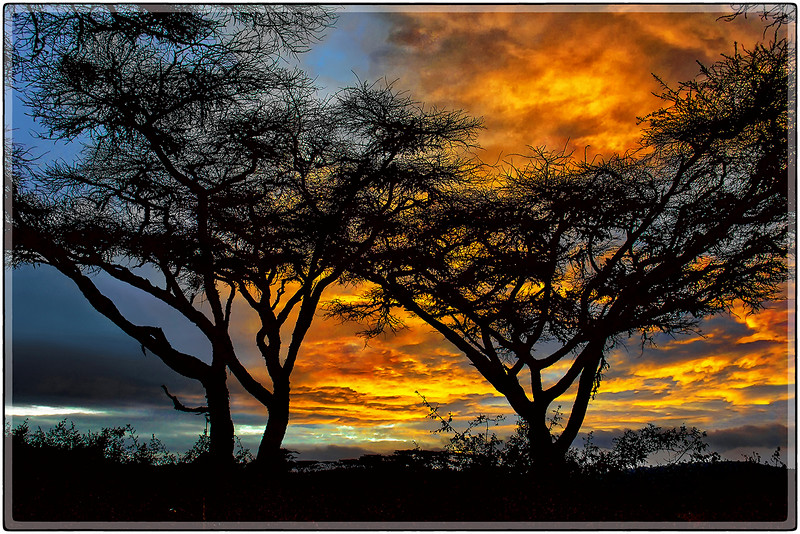 African Morning Glow