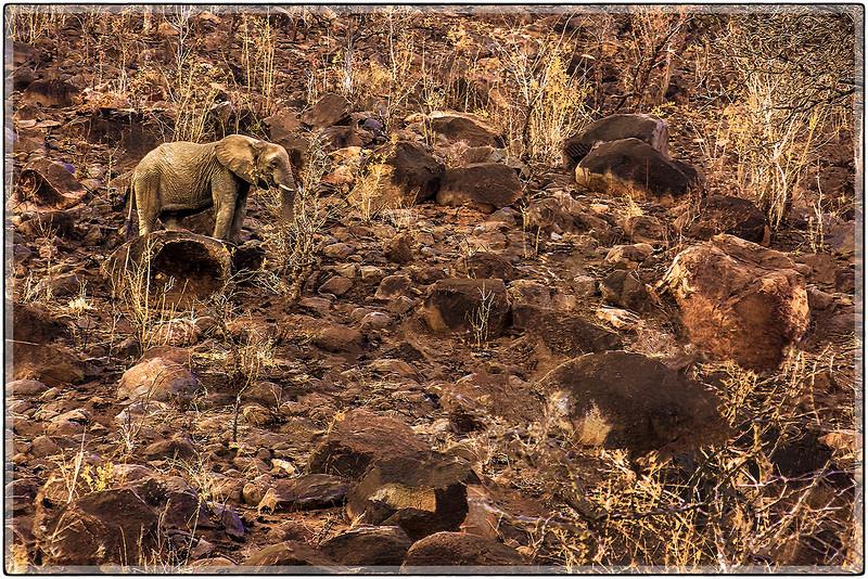 A Climbing Elephant