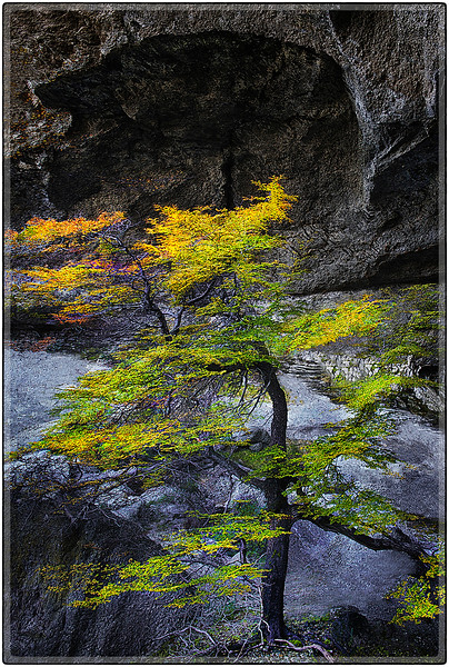 Tree and Cavity (Cueva Milodon)