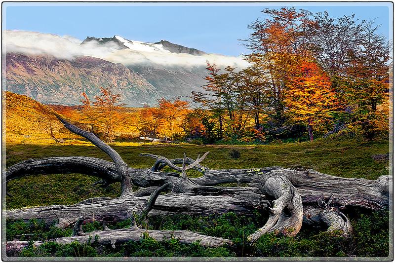 Dead Tree Landscape
