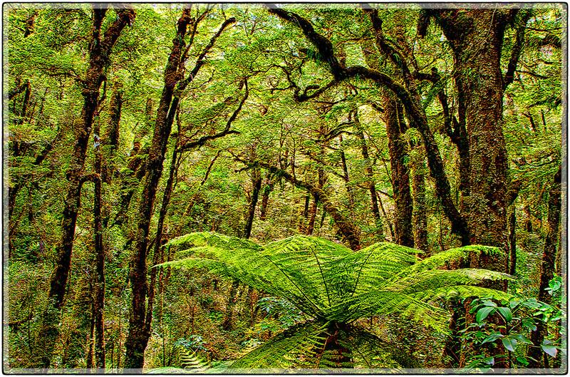 Vegetation of The Chasm