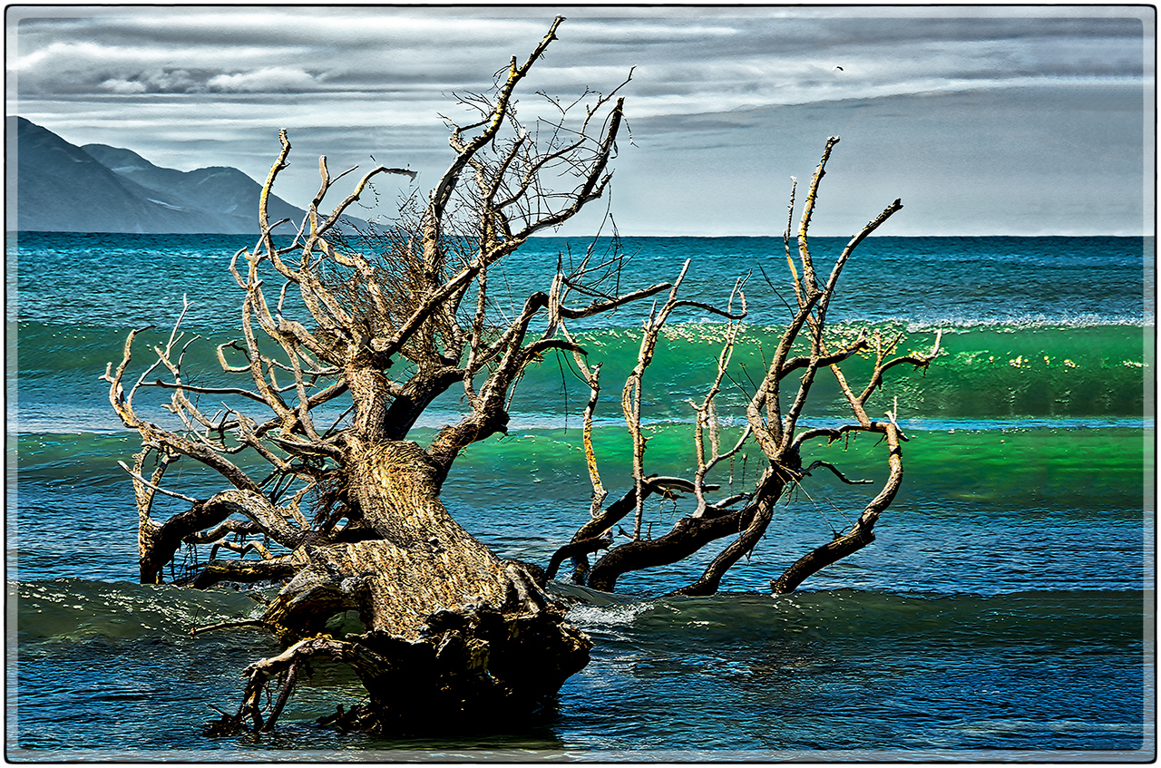 Dead Tree, Coast of Kaikoura