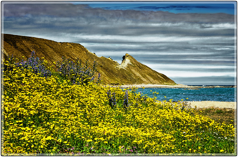 Clouds and Yellow Flowers