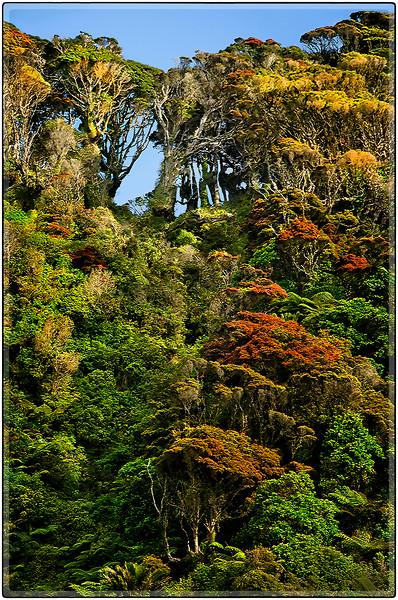 Coastal Vegetation of South Island