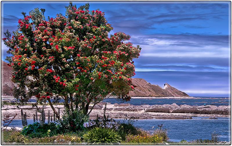 Mid Day Blues, Coast of Kaikoura