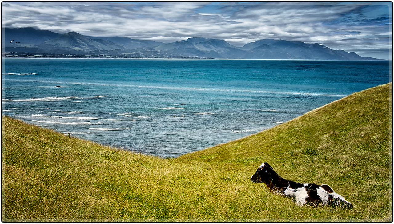 Green Pastures of Kaikoura