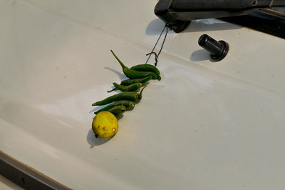 The talisman -- 7 green chilies and a lemon -- was seen on the front of a van. It is also seen in many other places in India and is apparently for good fortune.