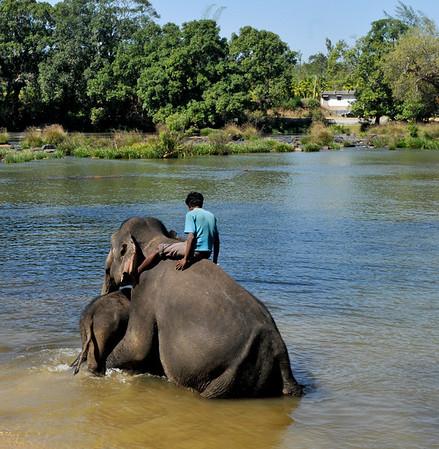 _DSC5174_elephant