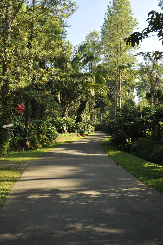 A road in the resort. Note the large red Christmas star.