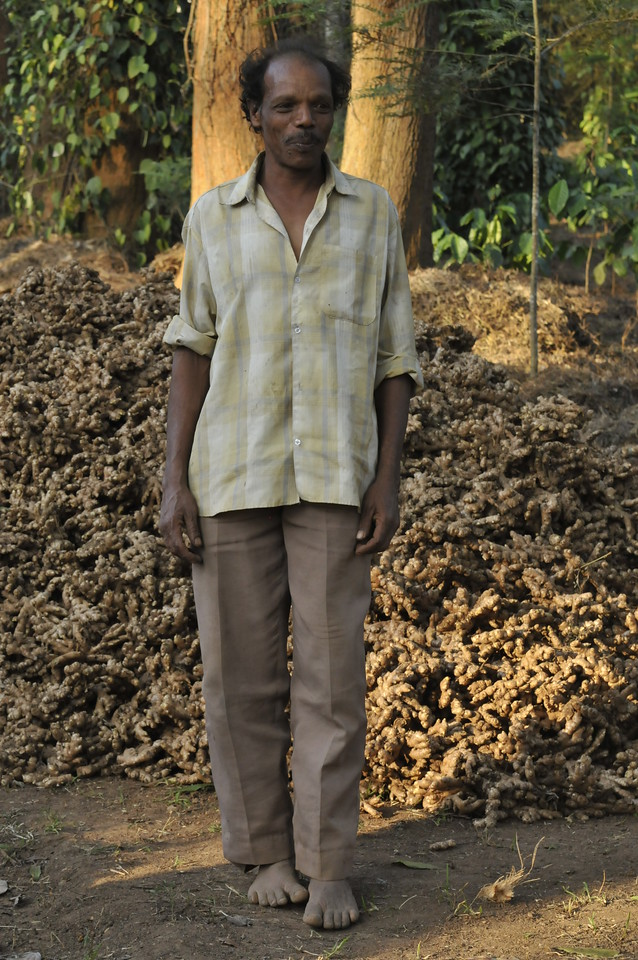 A large pile of ginger just dug up in the plantation. This is the heart of the coffee, tea, and pepper plantation.