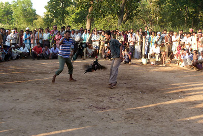 Cockfights are apparently a tradition in India.  We happened to stumble on an arena where action was taking place, including considerable betting on the outcome.  I was even offered the body of one of the dead roosters that didn't fare very well in his fight.