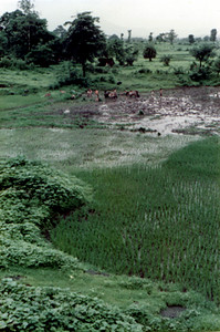 more fields of nityananda SHANKAR