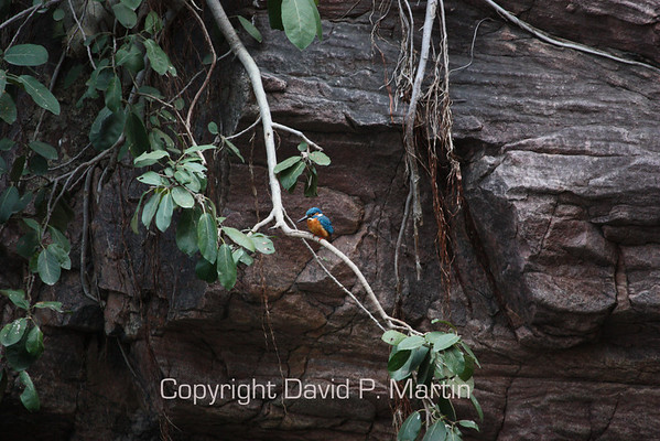 A kingfisher.
