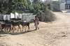 Herding cattle beside the National Highway.
