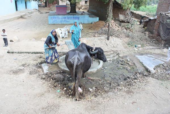 Village water pump.