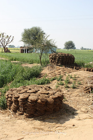 Cow dung stacked to dry for use as fuel.