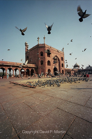 The Jami Masjid mosque in Old Delhi, the largest mosque in India. The courtyard can accommodate up to 20,000 people. Grain and bowls of water are left for the pigeons as a charitable act.