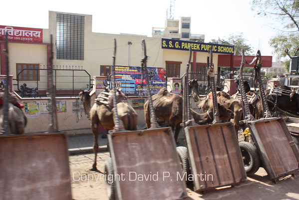 Camel cart parking.