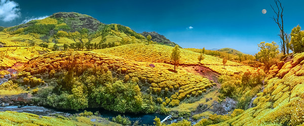 KERALA TEA FIELD COLOR IR