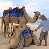 2020-02-28_99_Bali_Nikko Beach_Camels.JPG<br /> <br /> Somebody decided that tourists really love riding camels along the beach!