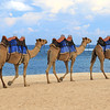 2020-02-28_102_Bali_Nikko Beach_Camels.JPG<br /> <br /> Now that is a sight you don't see every day on the beach!