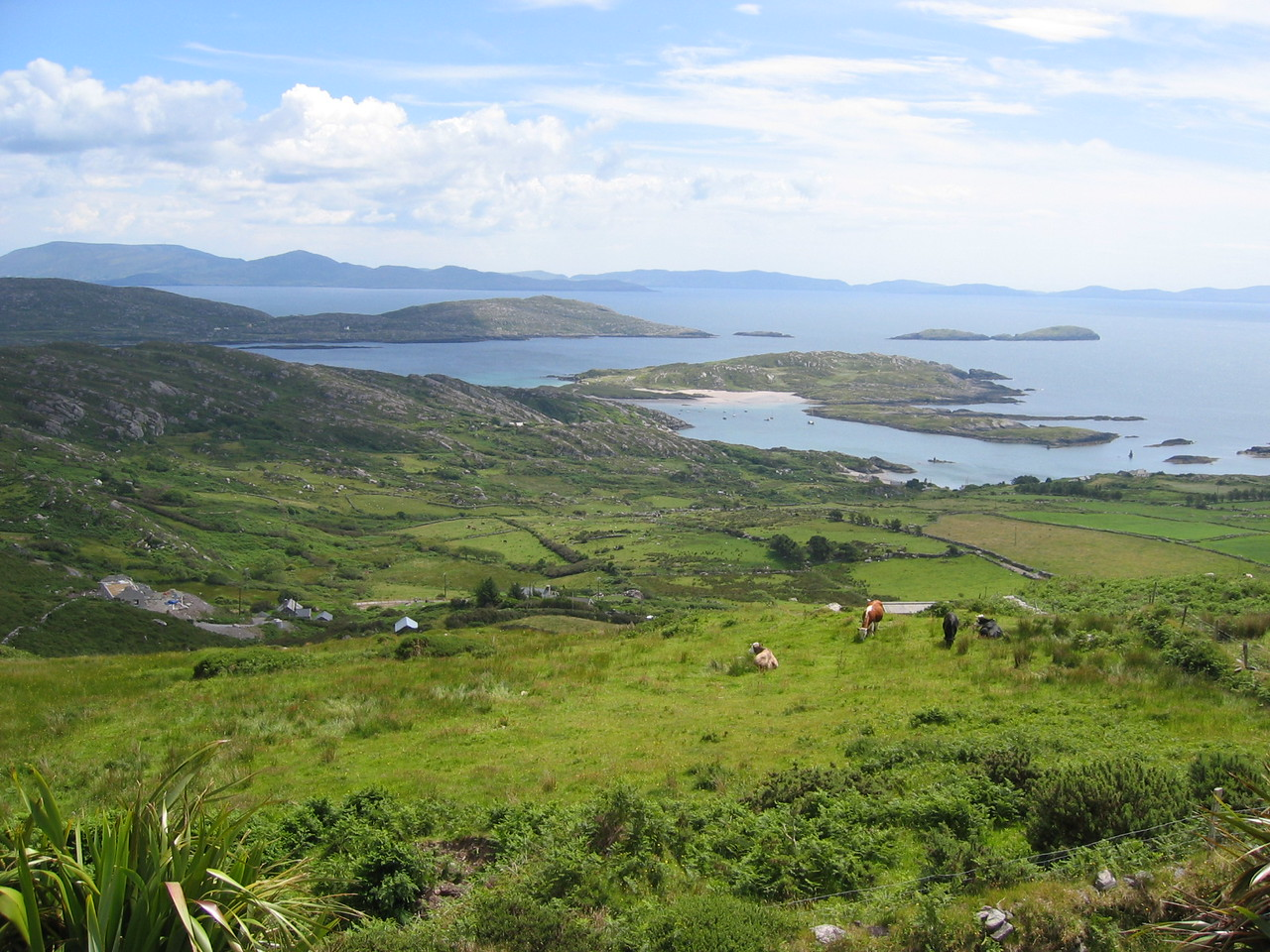 View of Dingle Bay in front of restraurant