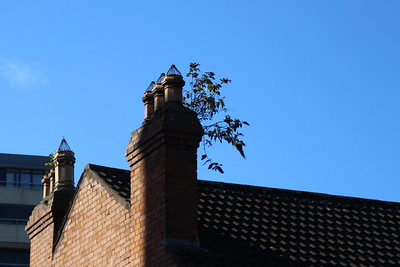 roof-top garden?