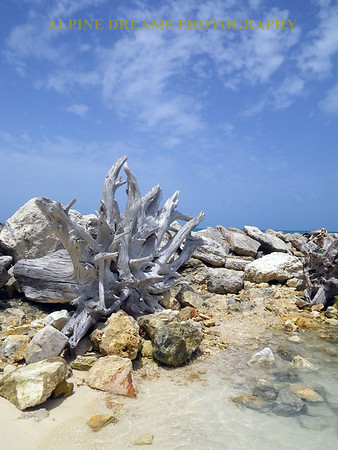 DRIFTWOOD ON JETTY