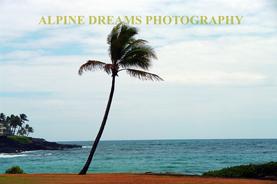 Another beach scene at Kaui. Note the color of the sand, sea, and sky as well as the palm tree added for effect.