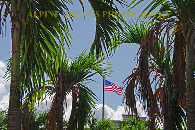 These Patriotic Palms are located near the Arizona Memorial.  If you get to Hawaii you have to get here. Being from the east coast I just could not stop shooting palm trees.